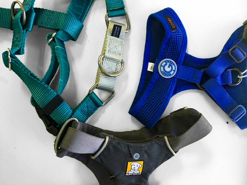 the puppy care company - What Harness is Right for my Dog