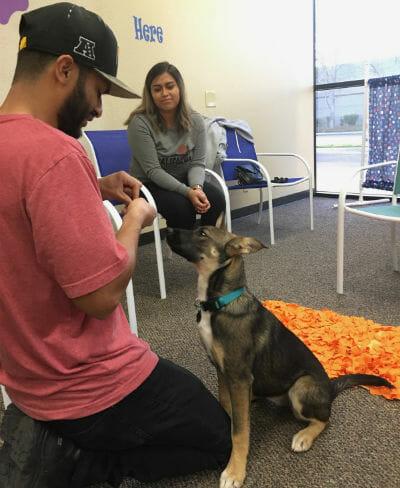 The Puppy Care Company - Private Training