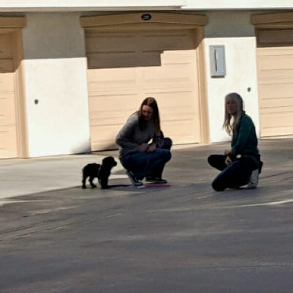 The Puppy Care Company – Combo Training Package for Pups