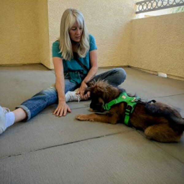 The Puppy Care Company – Puppy Training Combo Packages