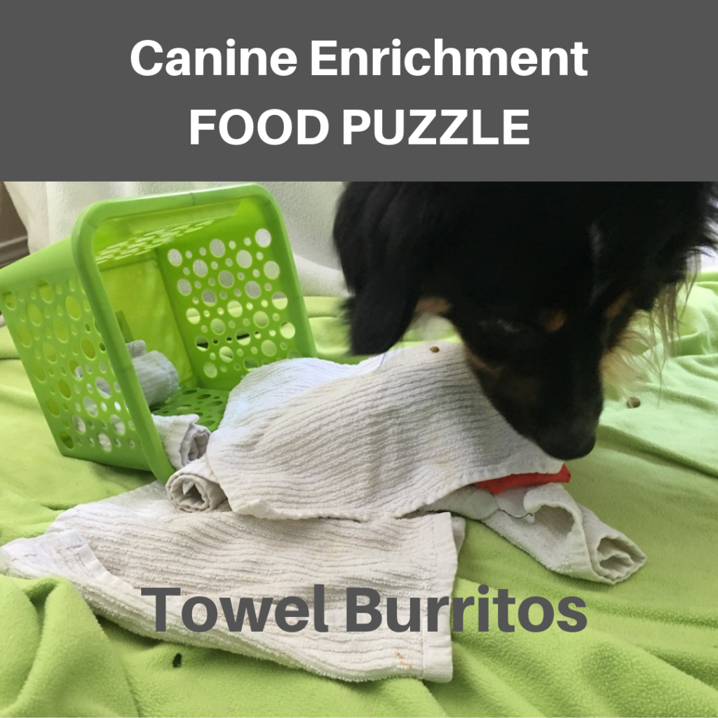 Towel Burritos Canine Enrichment