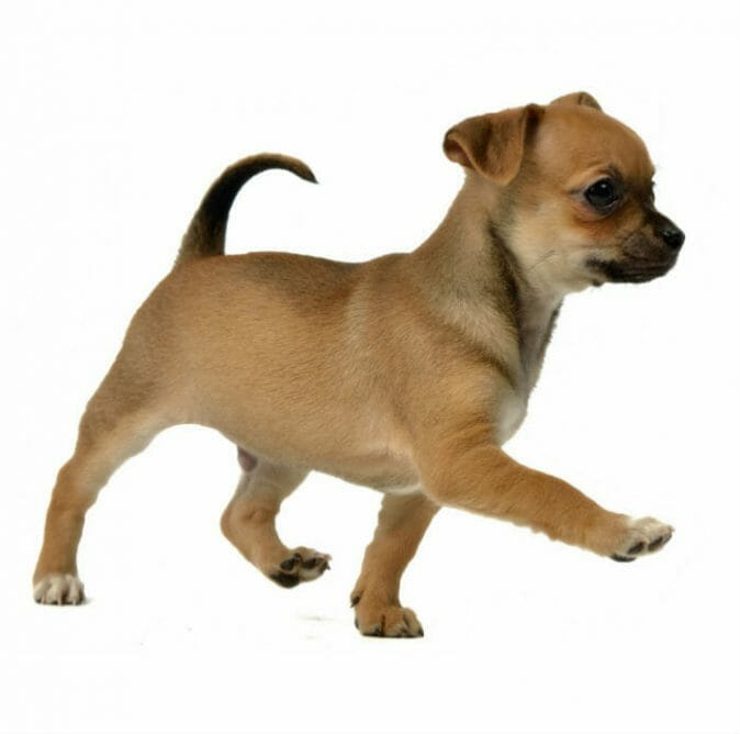 Private Training - The Puppy Care Company - 2