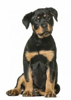 Private Training - The Puppy Care Company